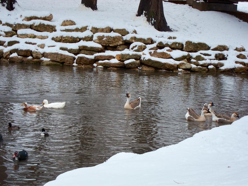 FW_WinterStorm_2010-02-12_12-29-02_IMG_1578_©StudioXephon2010_C1P
