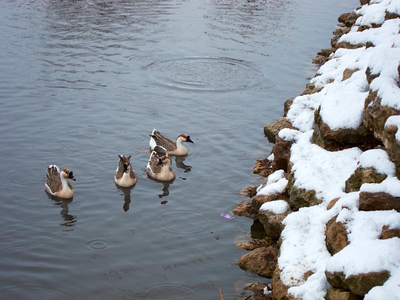 FW_WinterStorm_2010-02-12_12-32-54_IMG_1587_©StudioXephon2010_C1P
