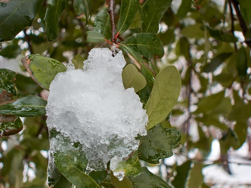 FW_WinterStorm_2010-02-12_12-30-41_IMG_1582_©StudioXephon2010_C1P