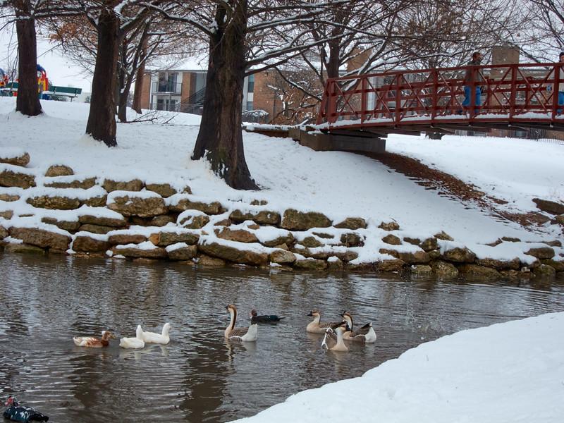 FW_WinterStorm_2010-02-12_12-28-32_IMG_1576_©StudioXephon2010_C1P