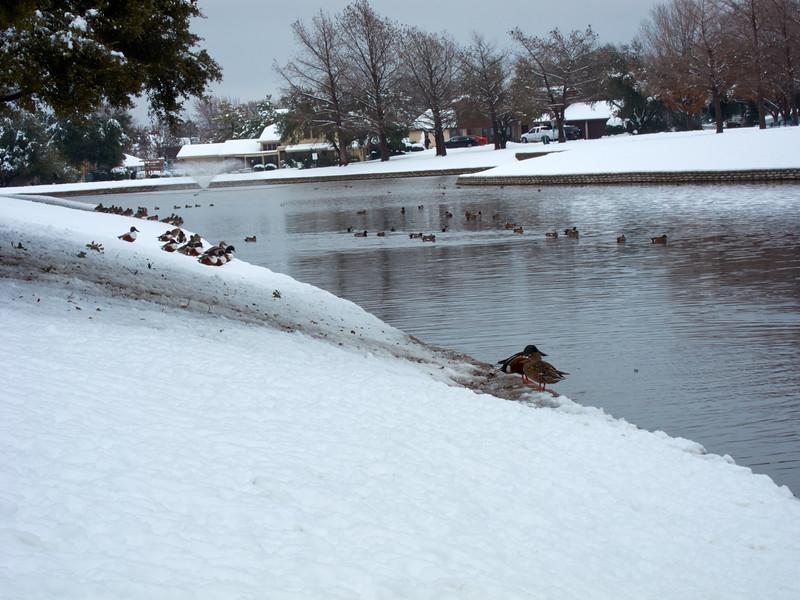 FW_WinterStorm_2010-02-12_12-29-31_IMG_1579_©StudioXephon2010_C1P