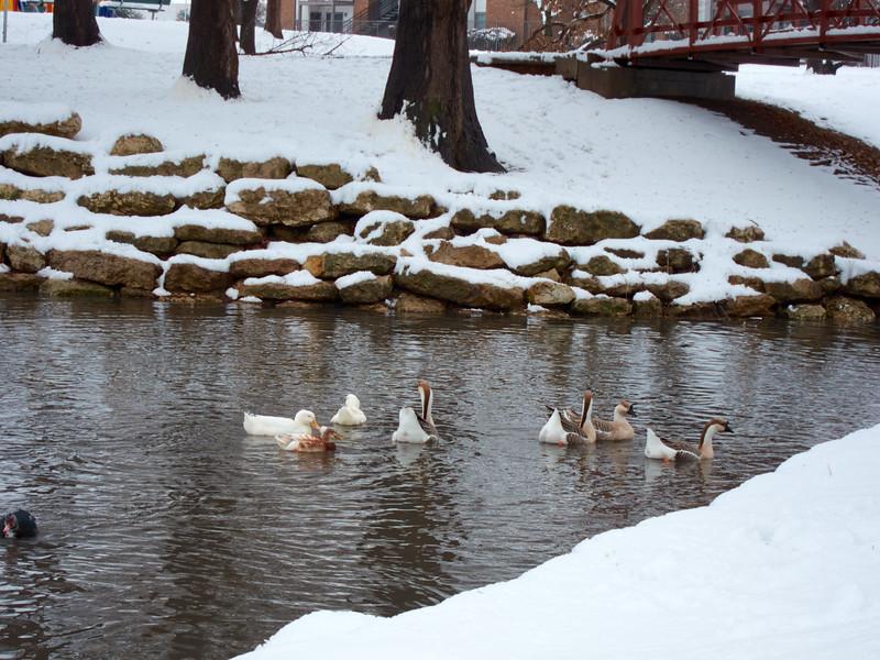FW_WinterStorm_2010-02-12_12-28-55_IMG_1577_©StudioXephon2010_C1P
