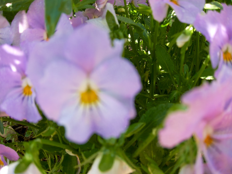 SABOT_2010-04-03_09-29-48_Canon PowerShot S90_IMG_0019_©StudioXephon2010_C1P