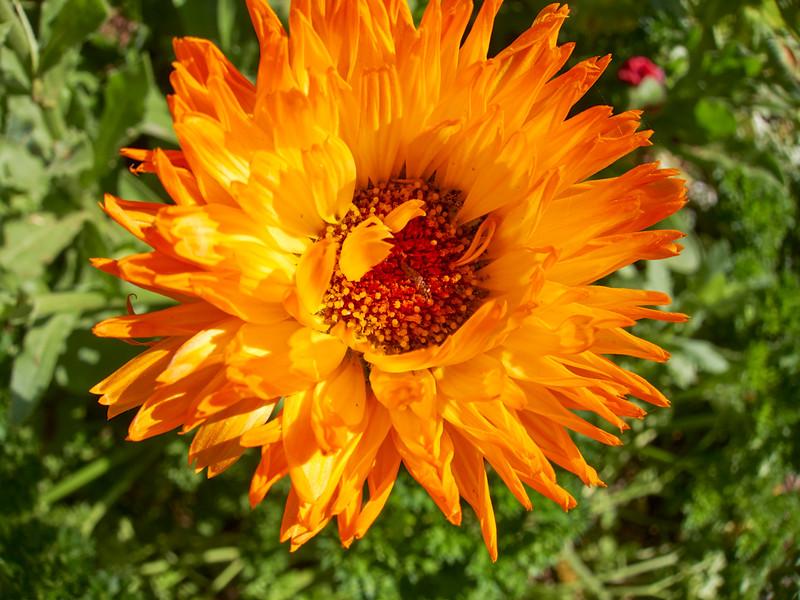 SABOT_2010-04-03_09-25-57_Canon PowerShot S90_IMG_0012_©StudioXephon2010_C1P