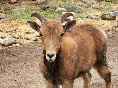 WildlifeRanch_2010-04-04_09-50-07_Canon PowerShot S90_IMG_0168_©StudioXephon2010_C1P