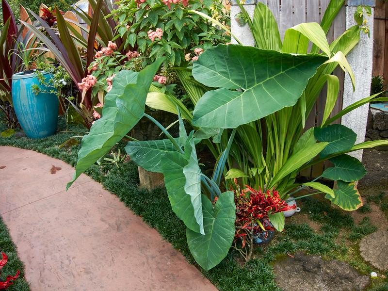 Kauai_2011-07-08_10-25-26_Canon PowerShot S90_IMG_2232_©StudioXEPHON2011_C1P