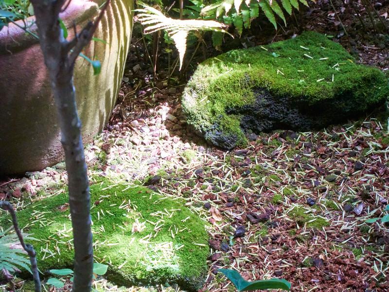 Kauai_2011-07-08_10-26-18_Canon PowerShot S90_IMG_2236_©StudioXEPHON2011_C1P