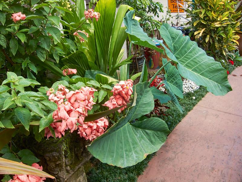 Kauai_2011-07-08_10-25-50_Canon PowerShot S90_IMG_2235_©StudioXEPHON2011_C1P