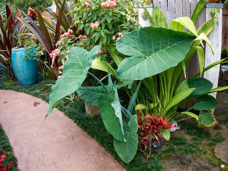 Kauai_2011-07-08_10-25-30_Canon PowerShot S90_IMG_2233_©StudioXEPHON2011_C1P