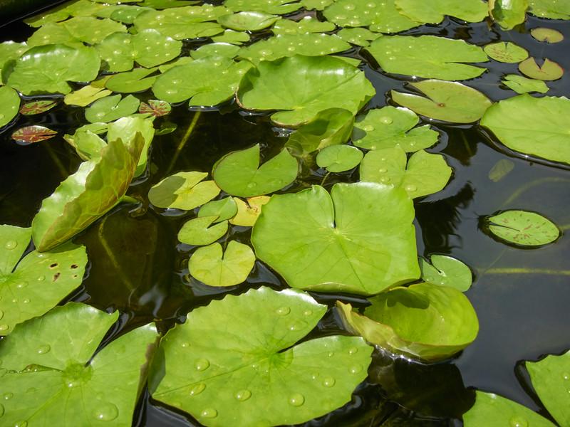 Kauai_2011-07-08_10-24-14_Canon PowerShot S90_IMG_2226_©StudioXEPHON2011_C1P