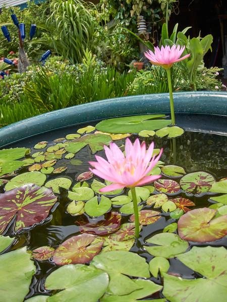 Kauai_2011-07-08_10-25-00_Canon PowerShot S90_IMG_2230_©StudioXEPHON2011_C1P