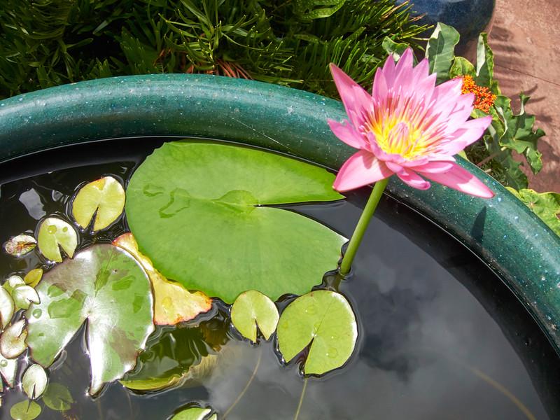 Kauai_2011-07-08_10-24-49_Canon PowerShot S90_IMG_2229_©StudioXEPHON2011_C1P