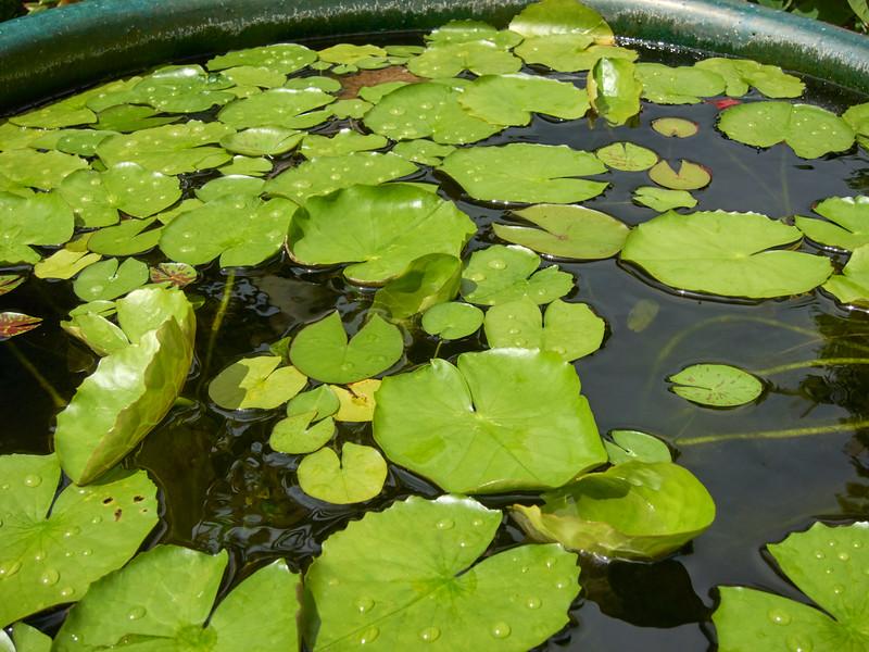 Kauai_2011-07-08_10-24-05_Canon PowerShot S90_IMG_2225_©StudioXEPHON2011_C1P