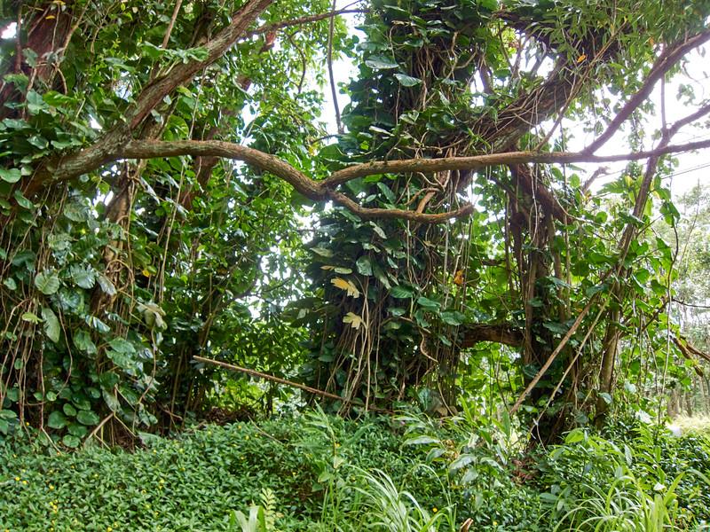 Kauai_2011-07-06_12-13-22_Canon PowerShot S90_IMG_2131_©StudioXEPHON2011_C1P