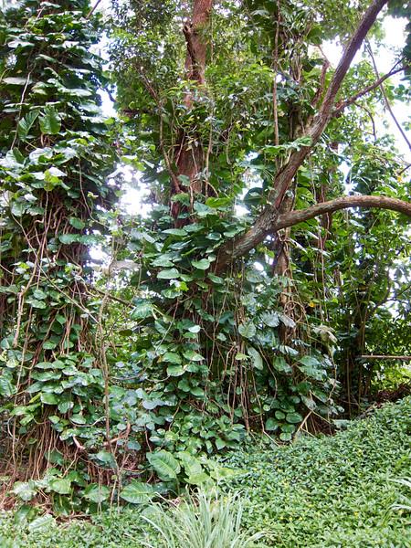 Kauai_2011-07-06_12-13-12_Canon PowerShot S90_IMG_2130_©StudioXEPHON2011_C1P