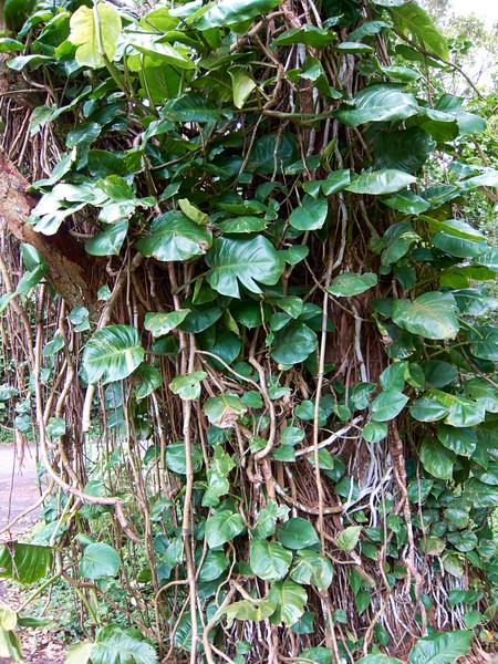 Kauai_2011-07-06_12-12-55_Canon PowerShot S90_IMG_2129_©StudioXEPHON2011_C1P