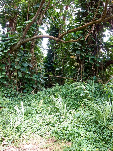 Kauai_2011-07-06_12-06-19_Canon PowerShot S90_IMG_2120_©StudioXEPHON2011_C1P