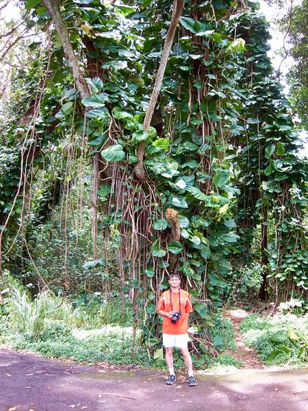 Kauai_2011-07-06_12-07-59_Canon PowerShot S90_IMG_2123_©StudioXEPHON2011_C1P