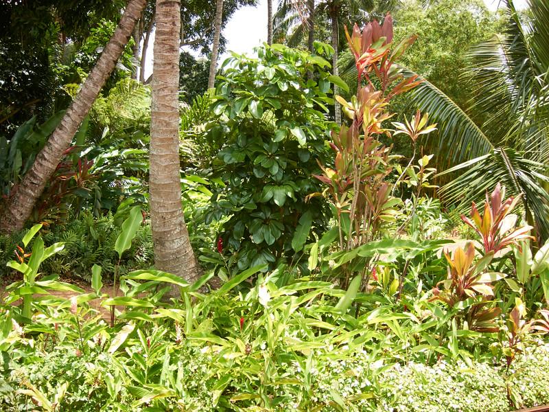 Kauai_2011-07-06_13-00-05_Canon PowerShot S90_IMG_2148_©StudioXEPHON2011_C1P