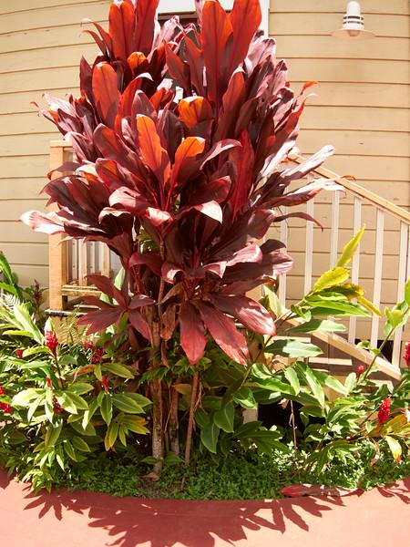 Kauai_2011-07-06_12-59-32_Canon PowerShot S90_IMG_2145_©StudioXEPHON2011_C1P