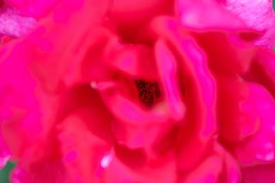 SABOT_2012-04-14_10-12-53_NIKON D700_DSC_2368_©StudioXEPHON2012_C1P