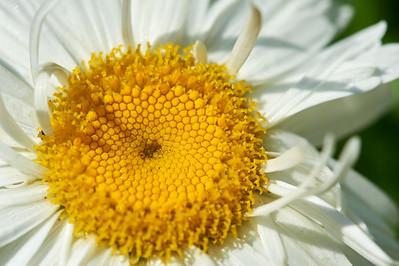 BotanicGardenOSU_2013-06-14_10-22-51_NIKON D700_DSC_4001_©StudioXEPHON2013_C1P
