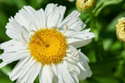 BotanicGardenOSU_2013-06-14_10-22-39_NIKON D700_DSC_3999_©StudioXEPHON2013_C1P