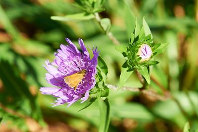 BotanicGardenOSU_2013-06-14_10-19-54_NIKON D700_DSC_3990_©StudioXEPHON2013_C1P