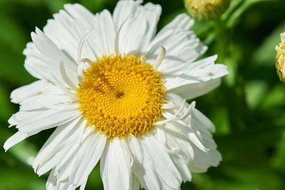 BotanicGardenOSU_2013-06-14_10-22-40_NIKON D700_DSC_4000_©StudioXEPHON2013_C1P