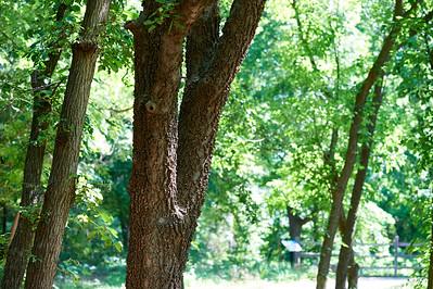 BotanicGardenOSU_2013-06-14_10-08-27_NIKON D700_DSC_3965_©StudioXEPHON2013_C1P