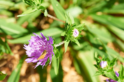 BotanicGardenOSU_2013-06-14_10-19-50_NIKON D700_DSC_3989_©StudioXEPHON2013_C1P