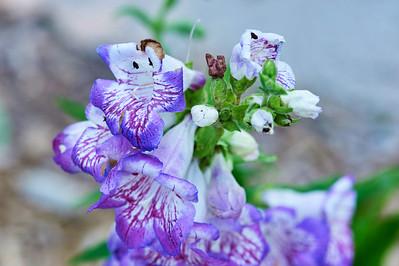 BotanicGardenOSU_2013-06-14_10-21-08_NIKON D700_DSC_3993_©StudioXEPHON2013_C1P