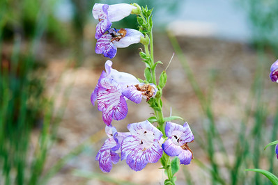 BotanicGardenOSU_2013-06-14_10-21-41_NIKON D700_DSC_3995_©StudioXEPHON2013_C1P