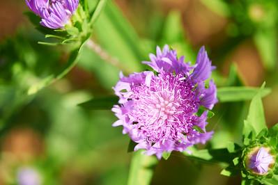 BotanicGardenOSU_2013-06-14_10-19-17_NIKON D700_DSC_3986_©StudioXEPHON2013_C1P