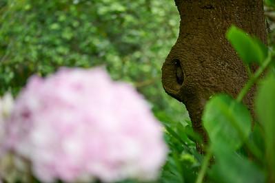JapaneseTeaGardenSF_2015-08-19_14-52-23_NIKON D700__DSC5179_©StudioXephon2015_C1P