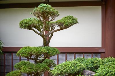JapaneseTeaGardenSF_2015-08-19_14-57-58_NIKON D700__DSC5193_©StudioXephon2015_C1P