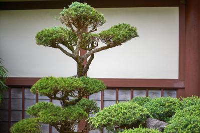 JapaneseTeaGardenSF_2015-08-19_14-57-55_NIKON D700__DSC5192_©StudioXephon2015_C1P