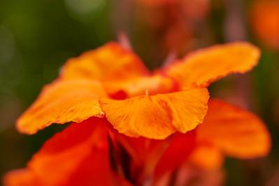 LensbabyVelvetFlowers_2015-08-20_17-05-10_NIKON D700__DSC6031_©StudioXephon2015_C1P
