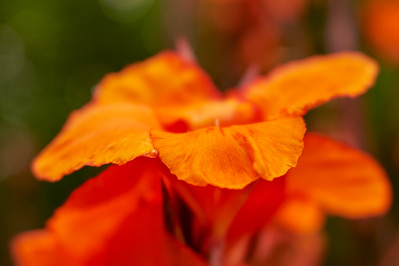 LensbabyVelvetFlowers_2015-08-20_17-05-14_NIKON D700__DSC6034_©StudioXephon2015_C1P