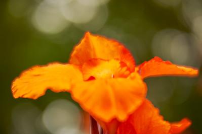 LensbabyVelvetFlowers_2015-08-20_17-03-26_NIKON D700__DSC6027_©StudioXephon2015_C1P