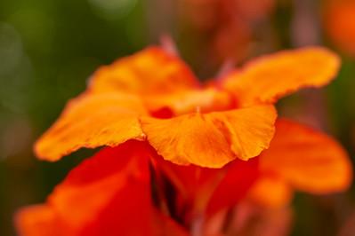 LensbabyVelvetFlowers_2015-08-20_17-05-12_NIKON D700__DSC6033_©StudioXephon2015_C1P
