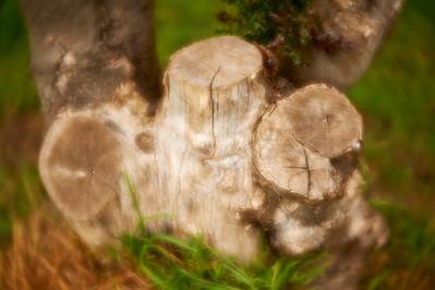 LensbabyVelvetFlowers_2015-08-20_16-45-49_NIKON D700__DSC5984_©StudioXephon2015_C1P