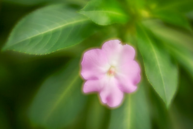 LensbabyVelvetFlowers_2015-08-20_16-55-12_NIKON D700__DSC6001_©StudioXephon2015_C1P