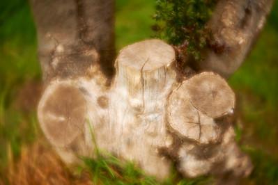 LensbabyVelvetFlowers_2015-08-20_16-46-09_NIKON D700__DSC5985_©StudioXephon2015_C1P