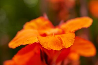 LensbabyVelvetFlowers_2015-08-20_17-05-11_NIKON D700__DSC6032_©StudioXephon2015_C1P