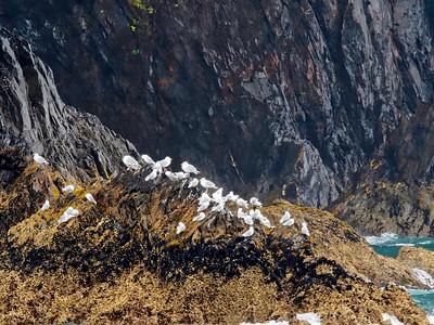 KenaiFjords_2016_08_06_12-29-42_E-M1            _M 40-150mm F2 8 + MC-14_P8061636_©2016_StudioXEPHON
