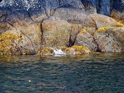 KenaiFjords_2016_08_06_13-52-44_E-M1            _M 40-150mm F2 8 + MC-14_P8061674_©2016_StudioXEPHON