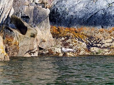 KenaiFjords_2016_08_06_13-53-31_E-M1            _M 40-150mm F2 8 + MC-14_P8061680_©2016_StudioXEPHON