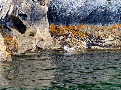 KenaiFjords_2016_08_06_13-53-34_E-M1            _M 40-150mm F2 8 + MC-14_P8061681_©2016_StudioXEPHON