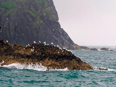 KenaiFjords_2016_08_06_12-30-04_E-M1            _M 40-150mm F2 8 + MC-14_P8061642_©2016_StudioXEPHON